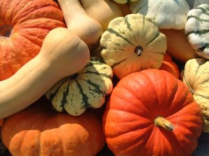 fall-vegetables squash pumpkins